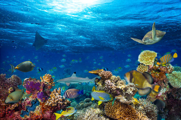 underwater coral reef landscape underwater coral reef landscape background  in the deep blue ocean with colorful fish and marine life undersea stock pictures, royalty-free photos & images