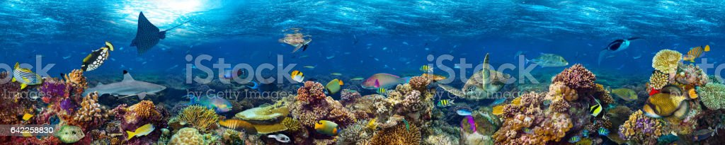 underwater coral reef landscape foto stock royalty-free