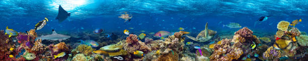underwater coral reef landscape - foto stock