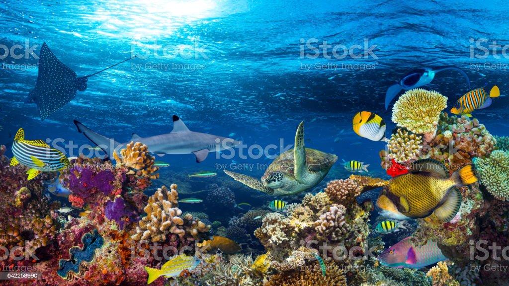 Fotografía de Paisaje De Arrecifes De Coral Bajo El Agua y más banco ...