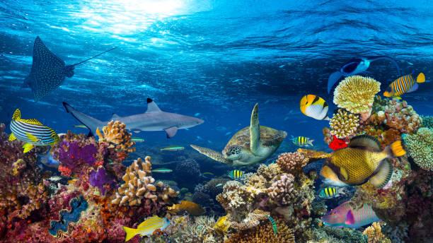 underwater coral reef landscape - ocean floor stock photos and pictures