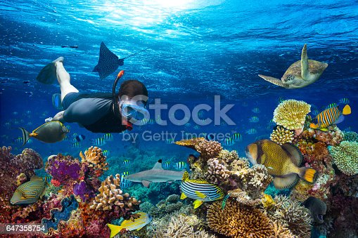 young men snorkling exploring underwater coral reef landscape background  in the deep blue ocean with colorful fish and marine life
