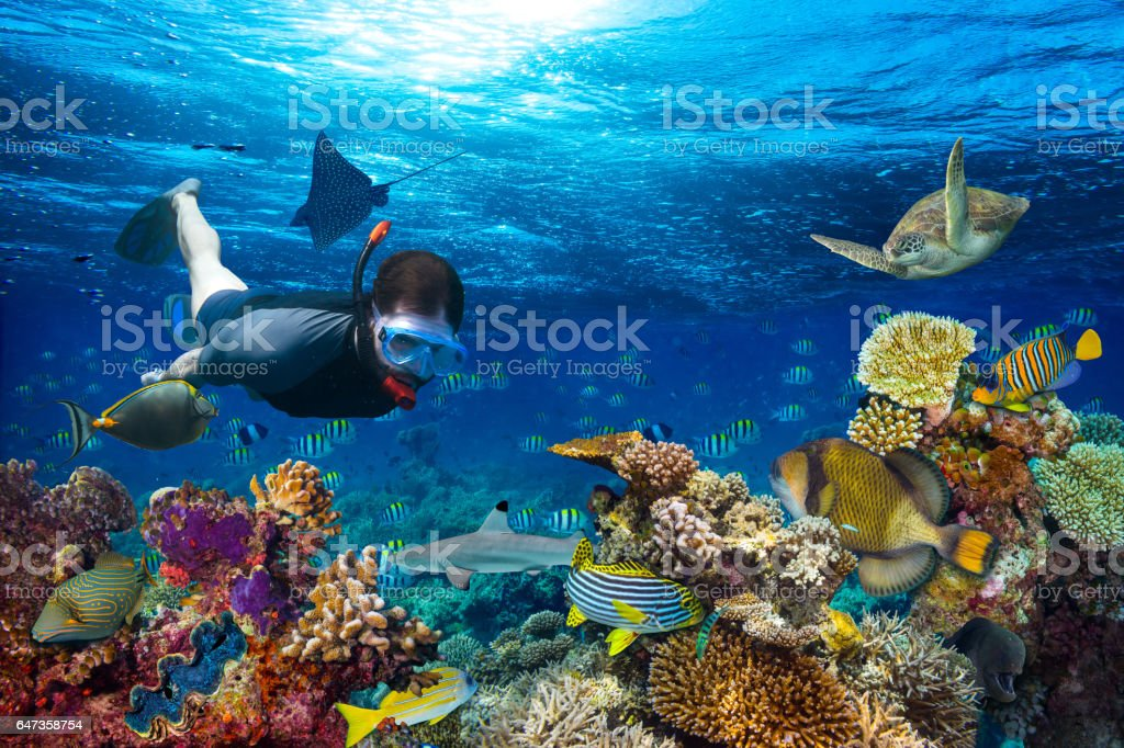 underwater coral reef landscape snorkling stock photo