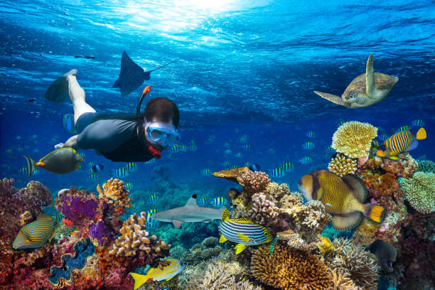 underwater coral reef landscape snorkling young men snorkling exploring underwater coral reef landscape background  in the deep blue ocean with colorful fish and marine life snorkel stock pictures, royalty-free photos & images