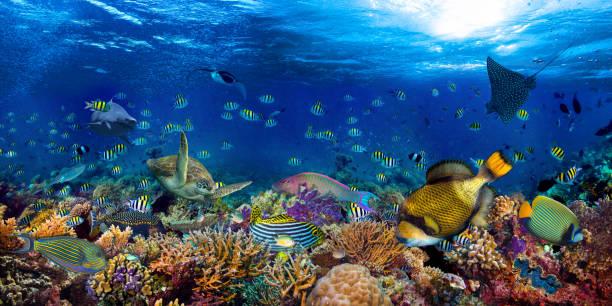 Unterwasser-Korallenriff Landschaft breit 2to1 Panorama Hintergrund im tiefblauen Ozean mit bunten Fisch Meeresschildkröte Meereswildleben – Foto