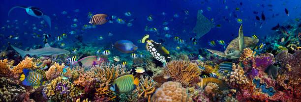 Unterwasser-Korallenriff Landschaft breit 3to1 Panorama Hintergrund im tiefblauen Ozean mit bunten Fisch Meeresschildkröte Meereswildleben – Foto