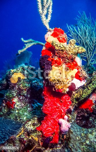 istock Underwater coral reef 500543574