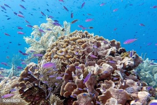 istock Underwater coral reef 506693529