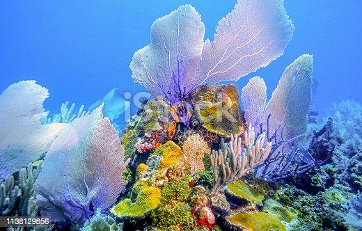 istock underwater coral reef, Roatan 1138129856