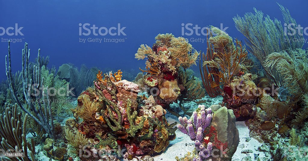 Underwater coral reef Roatan stock photo