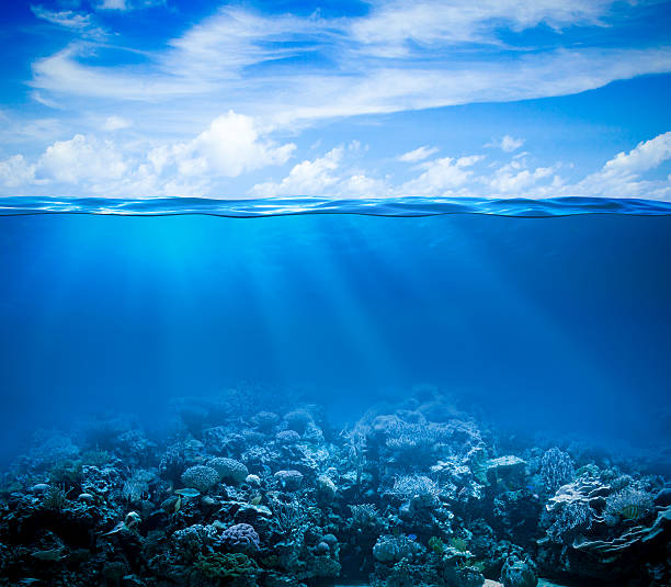 Underwater coral reef seabed view with horizon and water surface Underwater coral reef seabed view with horizon and water surface split by waterline undersea stock pictures, royalty-free photos & images