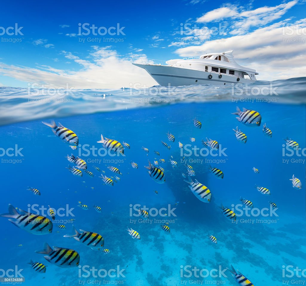 Underwater coral reef with horizon and water surface stock photo