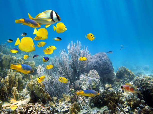 underwater coral reef with school of fish - tropikalna ryba zdjęcia i obrazy z banku zdjęć