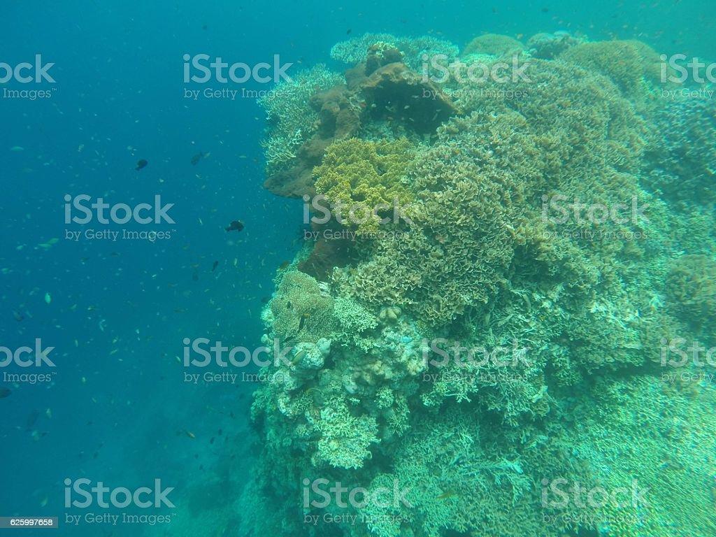 Underwater corals view stock photo