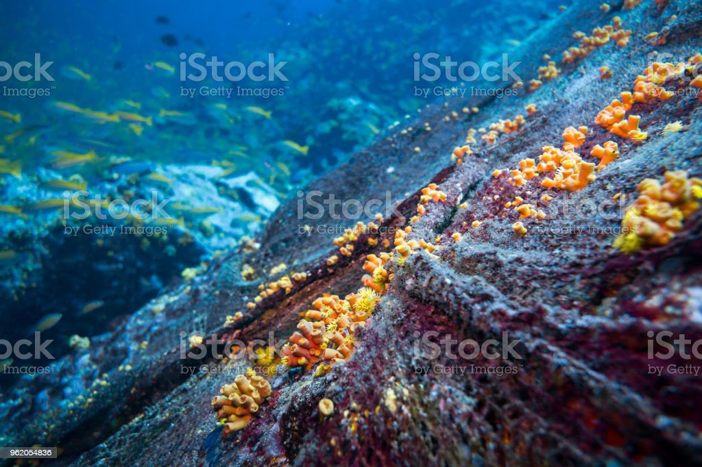 Underwater discarded fishing 'Ghost Nets' causing coral reef environmental damage stock photo