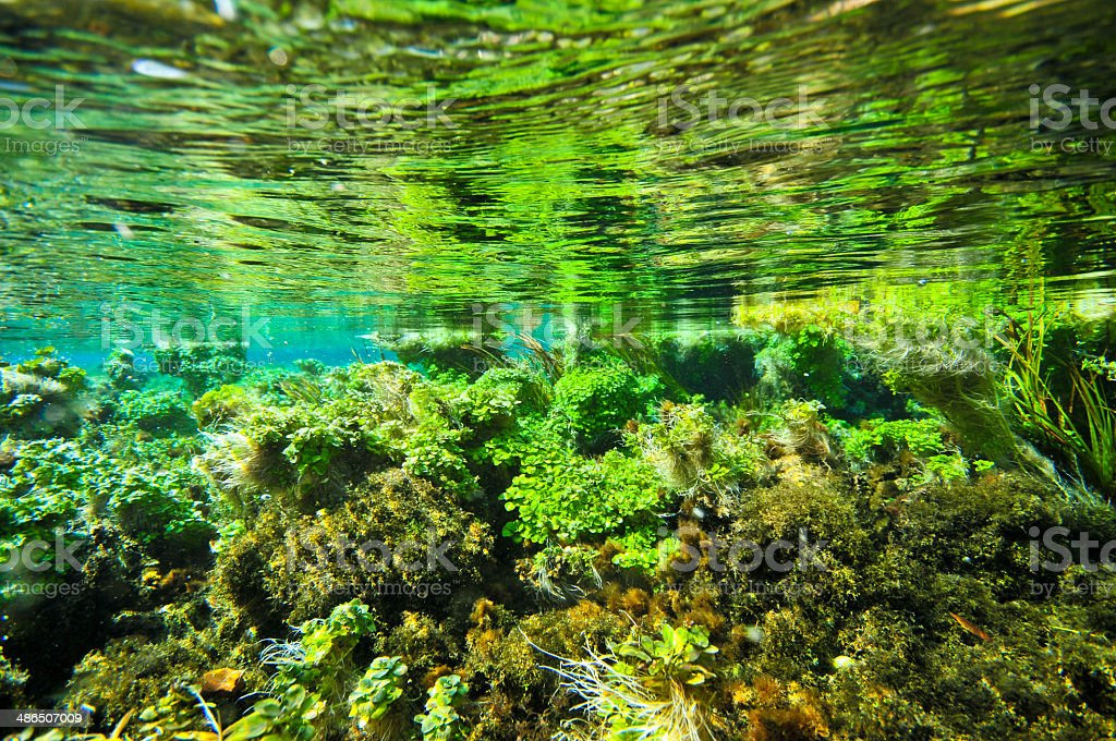Underwater esosystem of a lake stock photo
