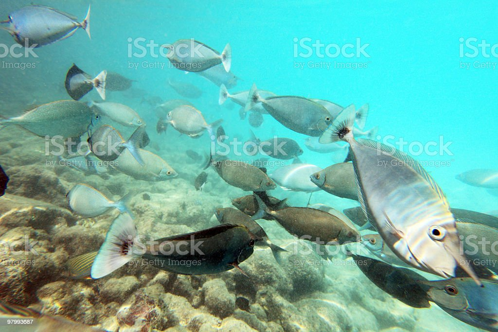 Underwater fishes. royalty-free stock photo
