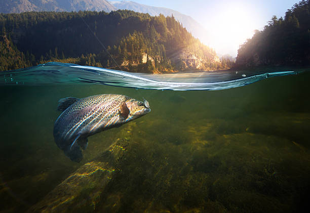 underwater fishing - rivier stockfoto's en -beelden