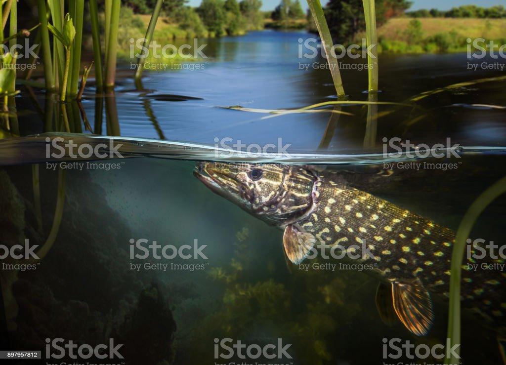 Underwater fishing. stock photo