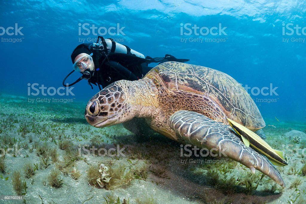 Underwater friendship stock photo