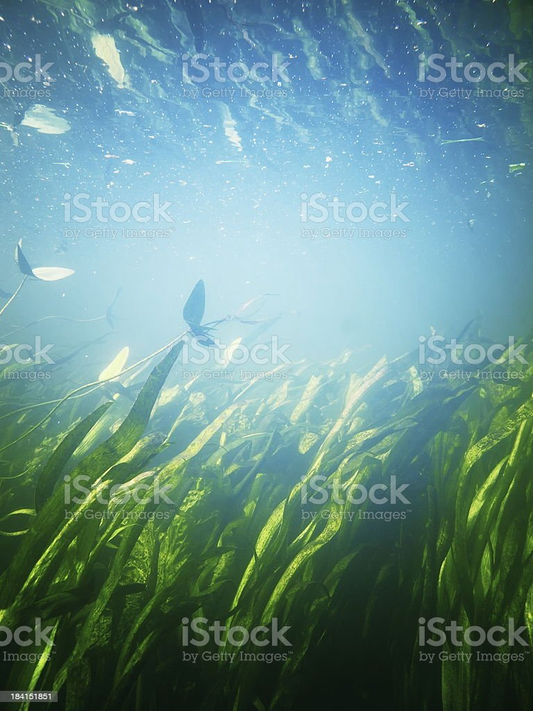 Underwater garden in bright sunlight royalty-free stock photo