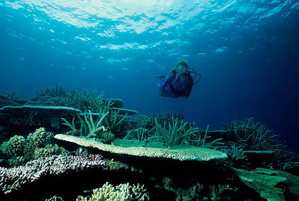 Unterwasser-Garten – Foto