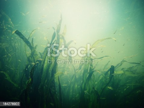 Underwater scene with reeds and little group of fish in light and bubbles / Cross processing