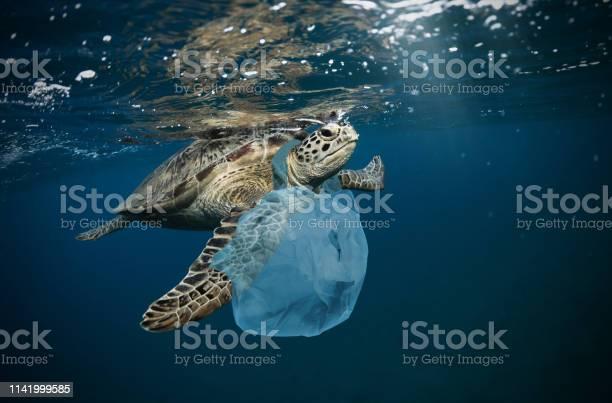 Underwater global problem with plastic rubbish picture id1141999585?b=1&k=6&m=1141999585&s=612x612&h=ibibmfga 06b qdommdpa6iecettihmrvm0vgr0cnys=