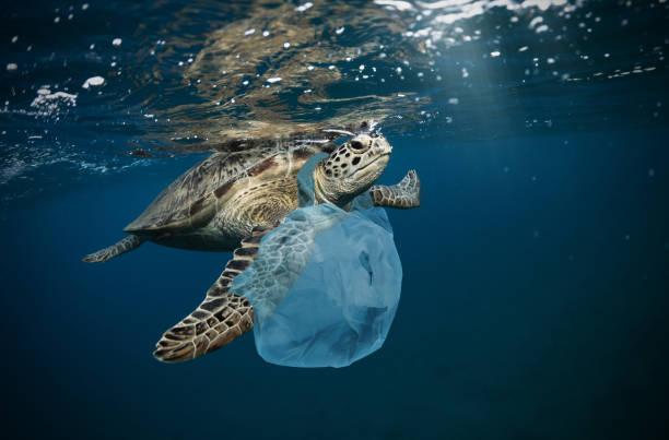 플라스틱 쓰레기와 수 중 글로벌 문제 - 바다 뉴스 사진 이미지