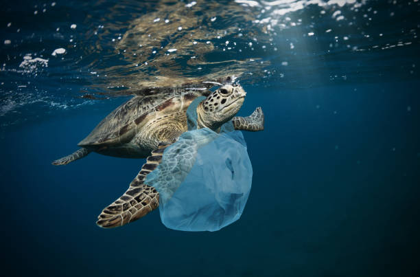underwater global problem with plastic rubbish - plastic stock pictures, royalty-free photos & images