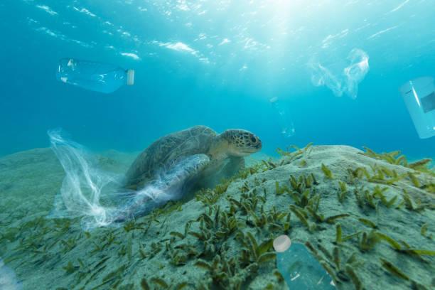 underwater global problem with plastic rubbish - desperdício alimentar imagens e fotografias de stock