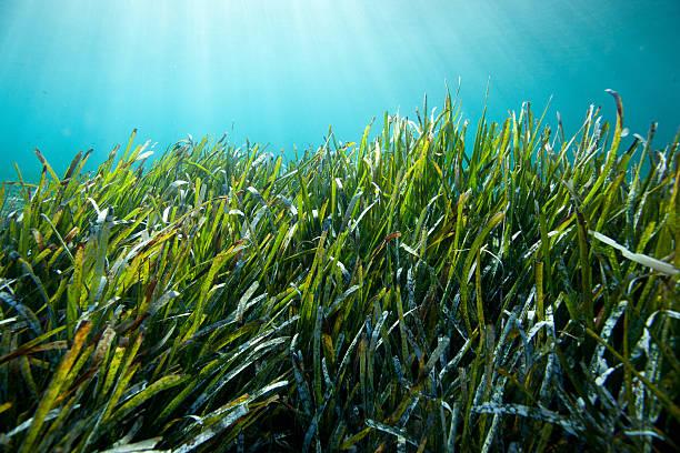 Underwater grass stock photo