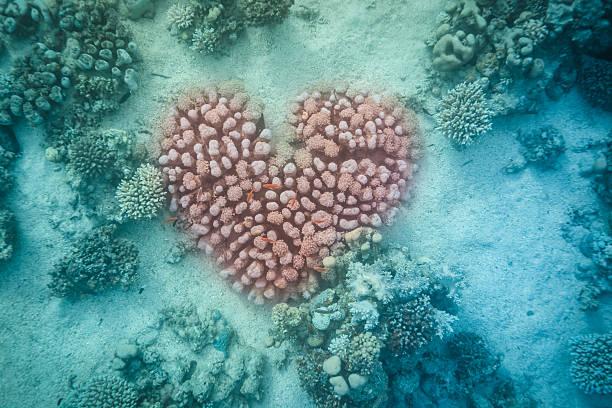 Underwater heart stock photo