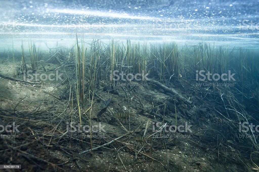 underwater lake scenery stock photo
