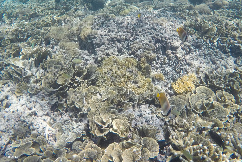 Underwater Landscape. Coral reef in tropical sea at Gili meno. Lombok, Indonesia. stock photo
