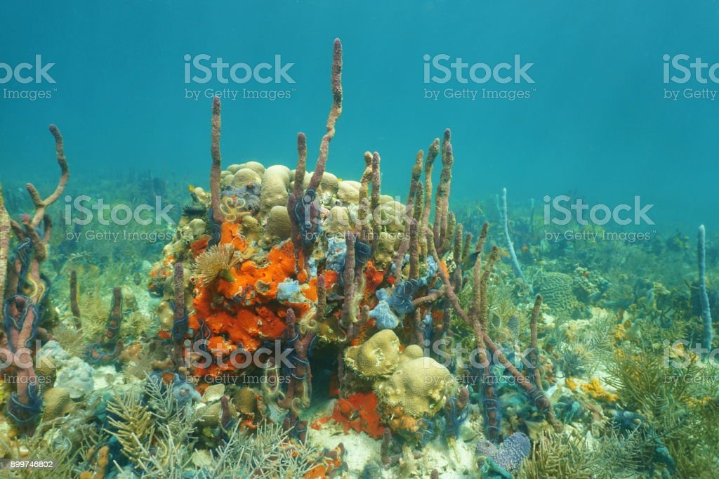 Underwater landscape on a coral reef with sponges stock photo