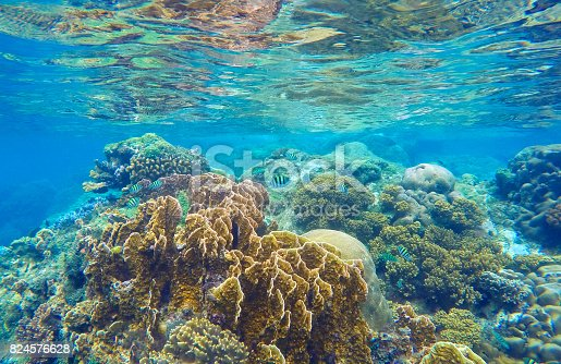 istock Underwater landscape with coral reef 824576628