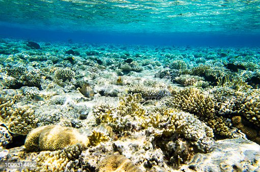 Underwater landscape with corals and fish
