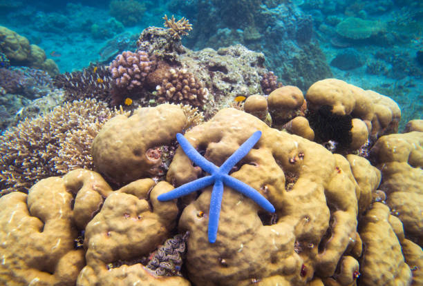 underwater landscape with starfish. coral undersea photo. seashore texture. - wildlife conservation stock photos and pictures