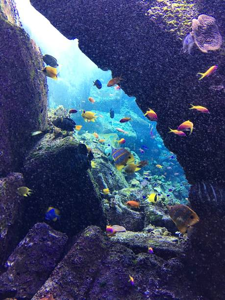 Underwater life, colourful coral and tropical fish. stock photo
