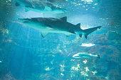 Shark in public aquarium
