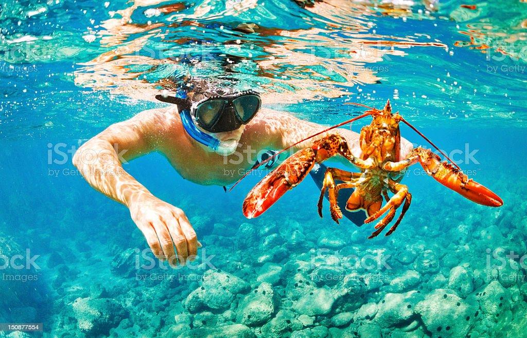 Underwater life royalty-free stock photo