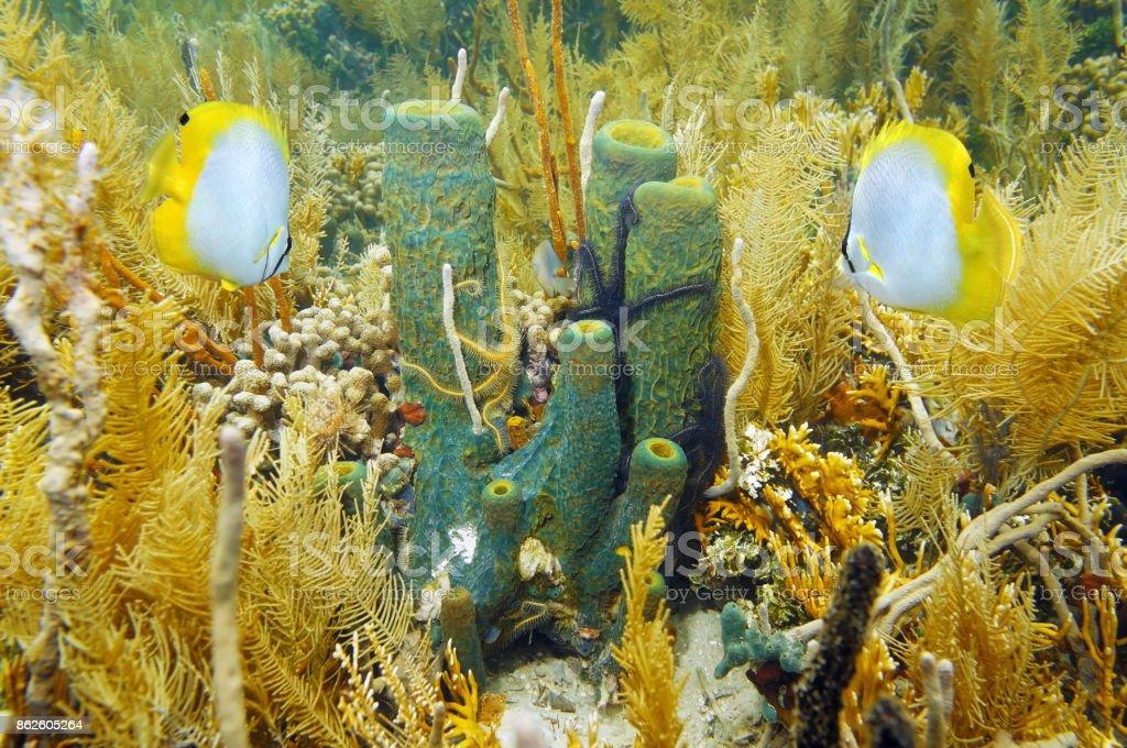 Vida submarina esponja de mar de coral al jardín - foto de stock