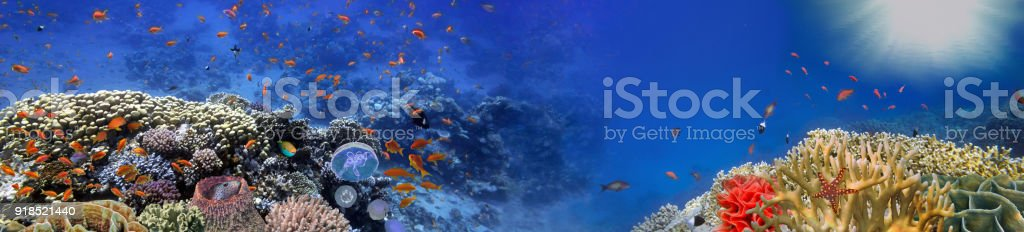 Underwater panorama and coral reef and fishes stock photo