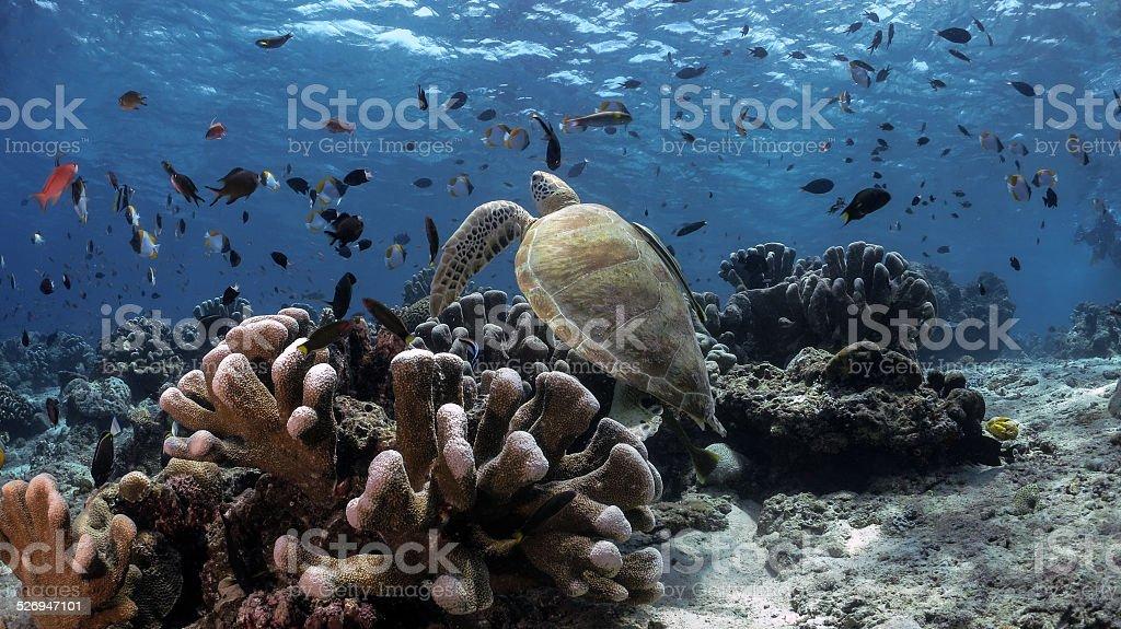 Underwater panorama of Sipadan Island stock photo