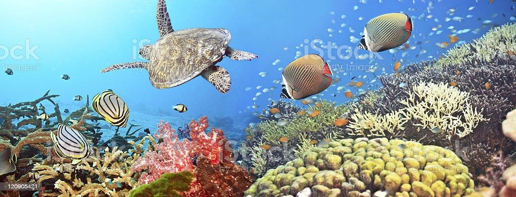 Unterwasser-panorama – Foto