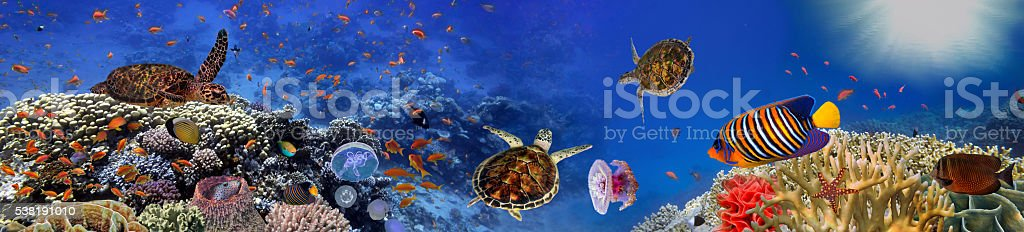 Underwater panorama with turtle, coral reef and fishes stock photo