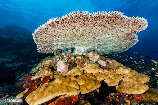 istock Underwater Paradise at Crystal Rock, Sea Mountain of Komodo Nationalpark, Indonesia 1221055065