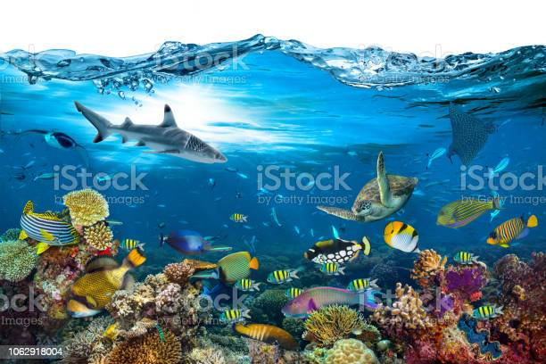 Underwater paradise coral reef wave isolated background picture id1062918004?b=1&k=6&m=1062918004&s=612x612&h=z7yiggsqun wna3rj21 tude20temagbpvm8fhcegyy=