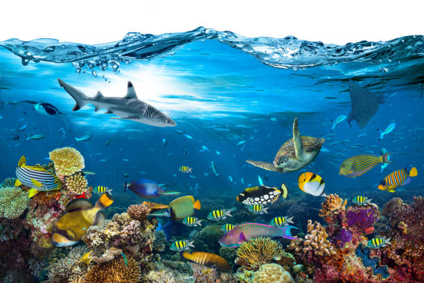 underwater paradise coral reef wave isolated background - under the sea fish foto e immagini stock